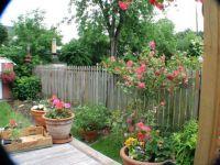 My Backyard June 2006