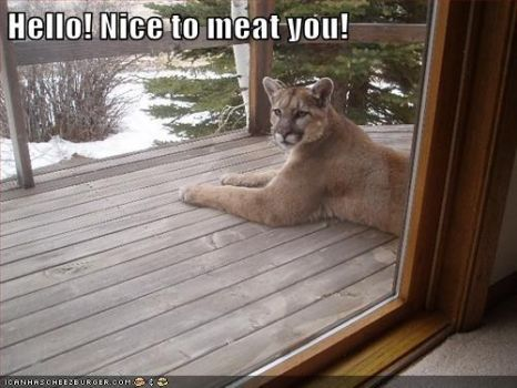 Nice to MEAT you....