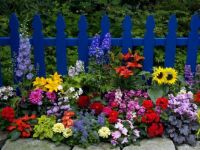 Blue Fence Flowers