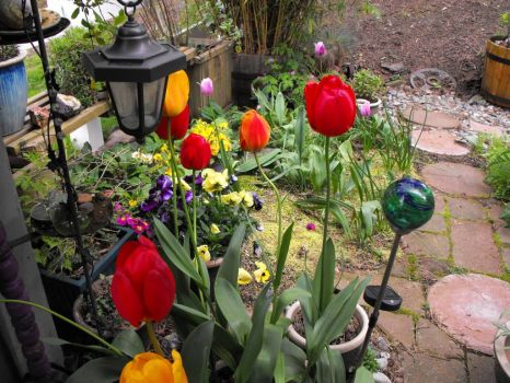 My beautiful Spring garden in living color