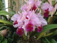 Orchids  Biltmore Estate Ashville North Carolina