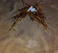 NJ Sea Monster Nesting Beside Fresh Footprint