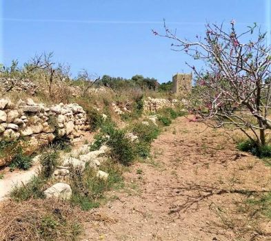 The Maltese Countryside, Mosta, Malta