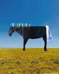 Cows Online....
