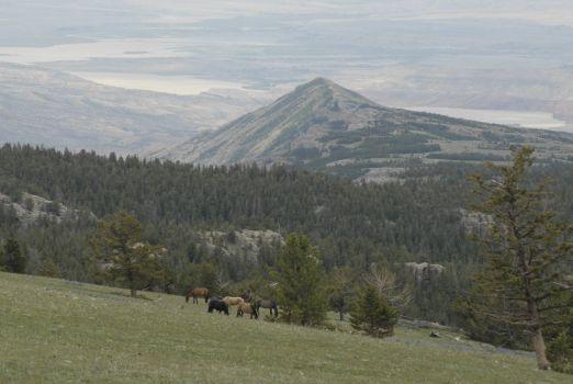 SYKES RIDGE      PRYOR MOUNTAIN