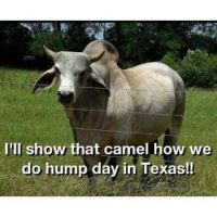 Hump Day in Texas Tomorrow