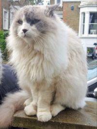 Cat in London