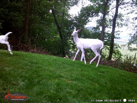 From the trail cam