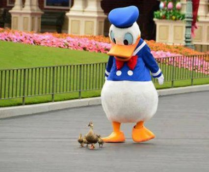 Donald & friends..