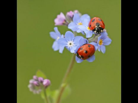 Ladybirds again