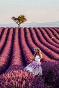 A Study in Lavender