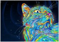 Colorful Kitty Cat