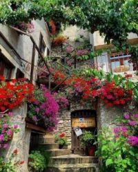 A home amongst the blooms