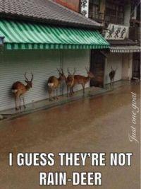 Raindeer?