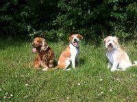 3 søde hunde.