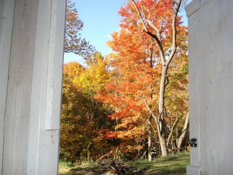 Fall View from the Outhouse