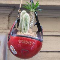 Cactus Holder
