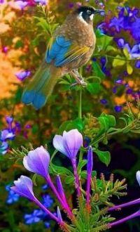Prachtige natuur