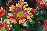 Pro mě neznámé květiny...  For me, unfamiliar flowers ...