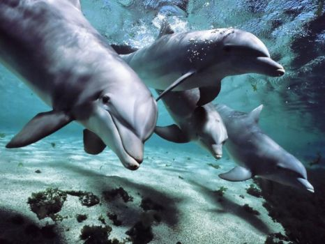 A group of beautiful Dolphins