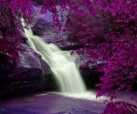 Purple Waterfall