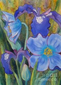 Iris and Himalayan Poppies