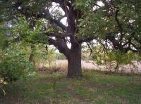 Cool tree..
