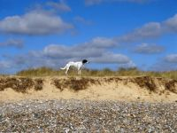 Dottie at Walberswick