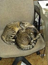 Jamie & TJ: Your chair is occupied, Mom!