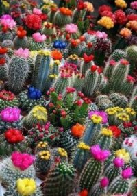 Cactus Lovers Delight