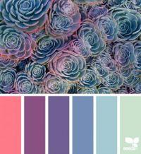 SucculentSpectrum_TraceyLBolton_f