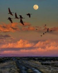 "THEME:  Birds - ""Flying by Moonlight"" by David Soldano  Sandhill Cranes"