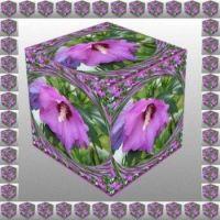 Ibišek v kostce...  Hibiscus in a cube