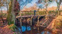 Pooh Sticks Bridge
