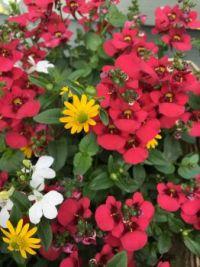 Beautiful little flowers