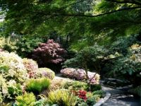 Rhodie garden