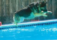 """""""Gunther"""" the water dog"""