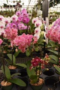 The Orchid Farm