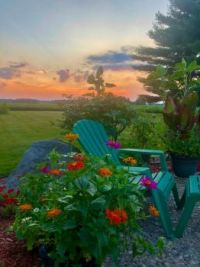 Sunset - Zinnias 7-2020