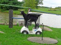 Goatmobile!