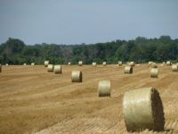 Baling time in Forest Hill< MI