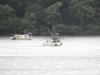 191_8447  houseboat & trawler, near Milson Island, 10am 11th Nov'15