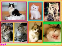 A Collage of Kittens (Apr18P01) - Especially for Pauline - Challenging