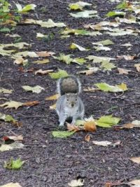 Squirrel in the Park 2