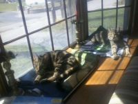 Cats at Rest