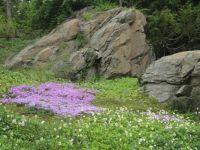 Ohme Garden