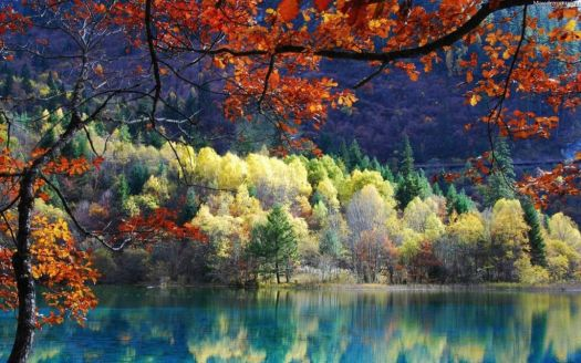Autumn trees and Forest River