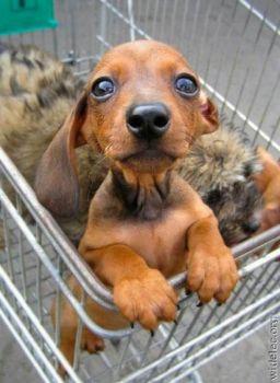 You gonna take me home??