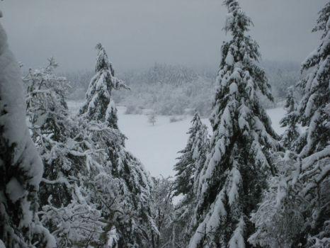 Oregon Christmas 2008