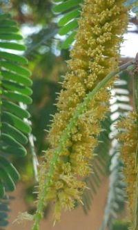 Madinah Natural 1